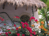 Bougenvilla Blooms Underneath a Thatch Roof, Puerto Vallarta, Mexico Photographic Print by John & Lisa Merrill