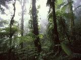 Monteverde Cloud Forest, Costa Rica Reproduction photographique par Stuart Westmoreland