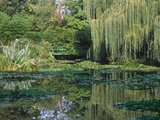 Claude Monet's Garden Pond in Giverny, France Stretched Canvas Print by Charles Sleicher