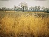 Fields at the Lillian Annette Rowe Bird Sanctuary on the Platte River Fotografie-Druck von Joel Sartore