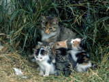 Outdoor Portrait of Cat and Kittens Photographic Print by Allen Russell