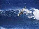 Windsurfer Surfing Fotografisk trykk