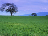 A Tree on a Hillside in Santa Barbara Photographic Print by Gary Conner