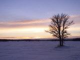 Tree During Sunrise, Gimli, Manitoba Stampa fotografica di Keith Levit