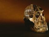 Two-Million-Year-Old Hominid Skull of Australopithecus Robustus Lámina fotográfica por Kenneth Garrett