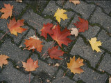 Red Maple Leaves Lie on a Brick Walkway Photographic Print by Vlad Kharitonov