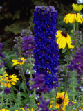 Flowers, AK Photographic Print by Mike Robinson