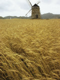 A Windmill Stands in a Field of Grain Photographic Print by Bill Curtsinger