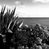 Plants by Garrans Bay, Cornwall, UK Fotografisk trykk av Ellen Kamp