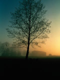 Misty Twilight View of a Silhouetted Tree Photographic Print by Sam Abell