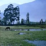 A Lone Horse Grazing in Rural Yucay, Yucay, Cuzco, Peru Fotografisk trykk av Wes Walker