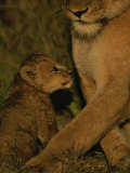 African Lioness and her Cub Photographic Print by Kim Wolhuter