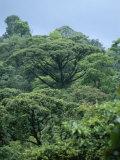 Rain Forest, Costa Rica Reproduction photographique par James P. Blair