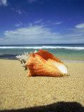 Seashell on Beach, Tobago, Caribbean Fotografisk tryk af Terry Why