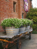 Flowers on Old Baggage Wagon, Vintage 1870 Shops, Napa Valley, California, USA Photographic Print by John Alves