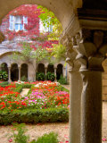 Cloisters at St-Paul-de-Mausole Monastery, St. Remy de Provence, France Photographic Print by Lisa S. Engelbrecht