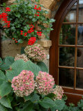 Geraniums and Hydrangea by Doorway, Chateau de Cercy, Burgundy, France Stampa fotografica di Lisa S. Engelbrecht