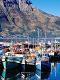 Fishing Boats in Hout Bay Marina, Cape Town, South Africa Fotografisk tryk af Pershouse Craig