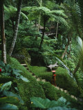 A Resort Worker Walks up the Steps of a Path Cut Through Dense Jungle Fotografisk tryk