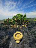 An Toilet on a Black Sand Beach with Cacti Fotografisk tryk af Raul Touzon