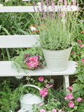 "Lavandula Angustifolia ""Munstead"" in Bucket on Bench Impatiens, Watering Can Wimbledon 1994 Fotografie-Druck von Lynne Brotchie"