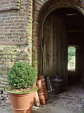 View Through Barn Doorway Buxus in Container Small Pots, Rake Photographic Print by Sunniva Harte