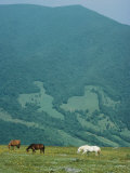 Horses Graze on Big Yellow Mountain, Appalachian Mountains, North Carolina Photographic Print by Sam Abell
