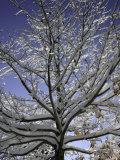 A Tree Covered with Snow, Boulder Fotografie-Druck von Dörte Pietron
