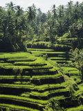Terraced Rice Fields on Bali Island, Indonesia Impressão fotográfica por Paul Chesley