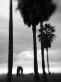 Venice Beach, Venice, Los Angeles, California, USA Fotografisk trykk av Walter Bibikow