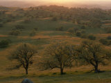 Rolling Foothills of the Sierra Nevada Spotted with Oak Trees near Bakersfield, California Photographic Print by Phil Schermeister