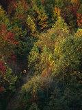 Cyclist Rides Through Fall Foliage in West Virginia Fotografisk trykk av Skip Brown