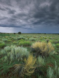 Sage and Storm Clouds Near Gallup Stretched Canvas Print by Phil Schermeister