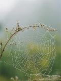 Spiderweb Covered in Dew Fotografisk tryk af Darlyne A. Murawski