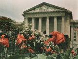 Flowers in Front of a Columned Building in Washington, D.C. Fotografisk trykk av Charles Martin
