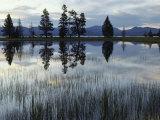 Yellowstone Lake at Dawn  Yellowstone National Park  Wyoming