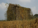 Autumn-Colored Vines Cover an Old Barn in a Field Near Easton Fotografisk trykk av Stephen St. John