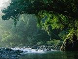 Fiume che scorre attraverso foresta pluviale, parco nazionale della Sierra Madre settentrionale Stampa fotografica di Tim Laman