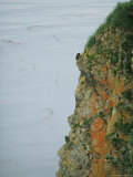 An American Bald Eagle Perches on its Clifftop Nest 写真プリント : クラウス・ニッゲ