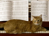 Family Cat Rests on a Piano Keyboard Beneath Sheet Music Fotografisk tryk af Charles Kogod