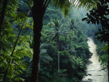 Agung River Cuts Through Desnse Jungle and Palm Trees Fotografisk tryk