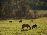 Horses Grazing in a Field, Tyringham, Massachusetts Photographic Print by Sam Abell