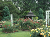 Gazebo and Roses in Bloom at the Woodland Park Zoo Rose Garden, Washington, USA Photographic Print