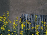 New Mexico, USA Photographic Print by Judith Haden