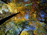 Greeley Ponds Trail, Northern Hardwood Forest, New Hampshire, USA Photographic Print by Jerry & Marcy Monkman