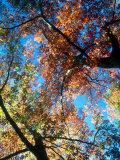 Fall Color, Washington, USA Fotoprint av William Sutton