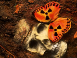 Butterfly on Skull Fotografisk tryk af Terry Why