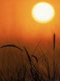 Sunset and Grass, Pt Reyes, CA Photographic Print by Kyle Krause