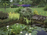 Small Pond with Water Lily, Arum Lily, Umbrella Plant and Curled Pondweed Fotografie-Druck von Ron Evans