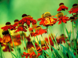 Colourful Organic Garden Nursery, Specialising in Hemerocallis Photographic Print by Lynn Keddie